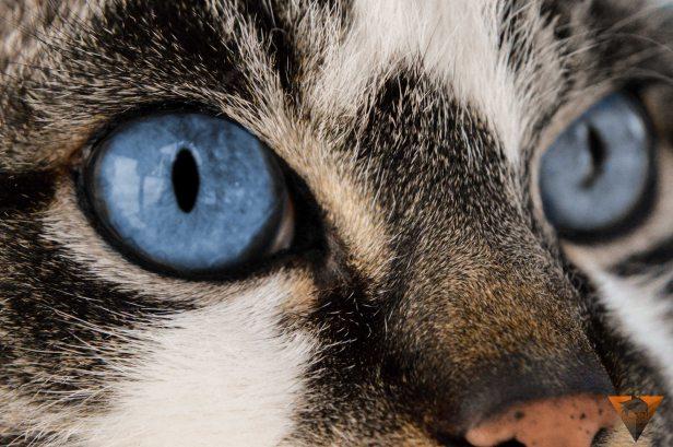 sistema visual cabecera gato